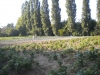produzione-verdure